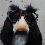 Chien avec un faux nez et lunettes
