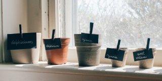 Pots de fleurs sur rebord de fenêtre